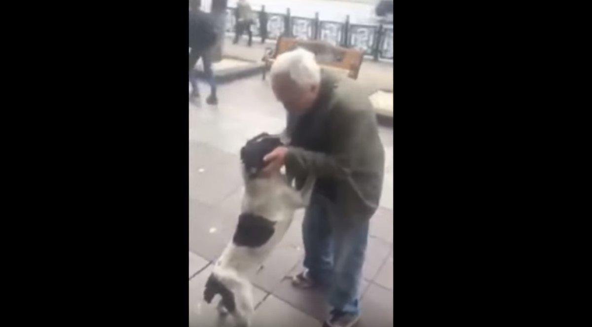 Intenta no llorar: el hermoso reencuentro con su perro después de tres años